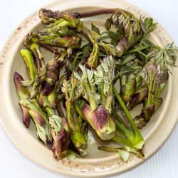 山菜 タラの芽