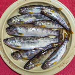 2021060101アマゴ渓流釣り釣果